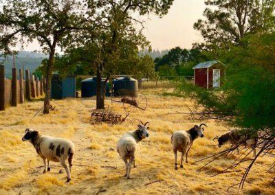farm15